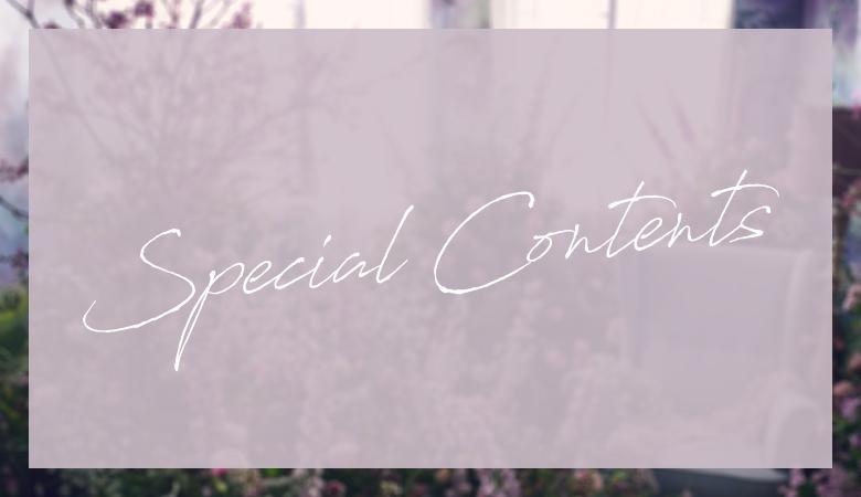 Eyelash Special Contents